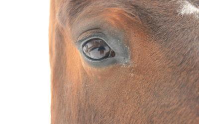 Zijn er parallellen tussen een kudde paarden en leiderschap in het bedrijfsleven?